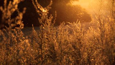 Seasonal Allergies, Functional Medicine
